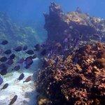 Isla Grande - Snorkeling from the shore
