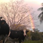 Rainbow seemed to rest on our pastures