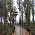 Chesser Island Boardwalk and Owls Roost Tower - Okefenokee