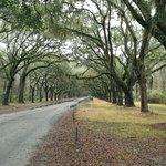1 mile long oak driveway