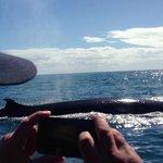 whale photo near little barrier island