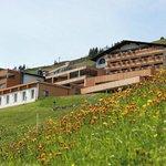 einzigartige Alpenflora vor der Tuer