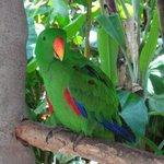 Птицы в музее очень красивы