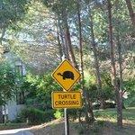 Осторожно! Черепашки перебегают дорогу!