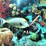 The lobby Aquarium