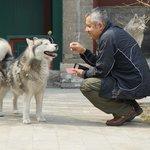 La marvillosa pareja de huskies siberianos que estan de permanentes vecinos...