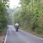 Elephant on the road. Watch out if you drive. Give these guys plenty of room!