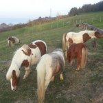 Animales que pastan a sus anchas alrededor de la casa rural Pikua