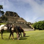 St Leonard's Horse Riding - Tours
