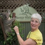 Visiting with a Koala at Featherdale Wildlife Park