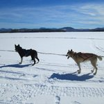 Lake Umbagog dogsleding