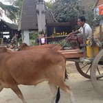 passing oxcart