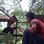 Jonathon feeding the capuchin monkey a banana; he usually comes every evening.