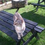 The friendliest pub cat around