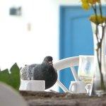 palomas acechando en el desayuno