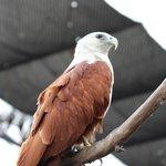 birds of prey enclosure