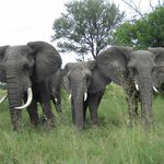 Elephants on the move...bring extra memory cards for your camera as I took over 1700 pictures
