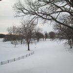 View from window toward wooded golf course area (under the snow!)