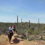 Horseback riding in Saguaro national park