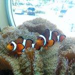 Clown Fish in tank at entrance