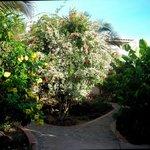 entering the garden courtyard at Casa de Laura