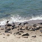 Some of the seals on the beach