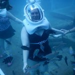 Photo by SeaTrek Divers
