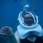 Sea Urchin Photo by SeaTrek Divers