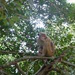 A resident of Udawattakele Royal Forest Park