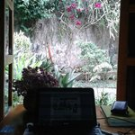 vista jardín desde habitación