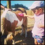 Pony grooming a big hit with my girls