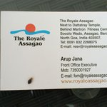 BedBug Caught in Hotel Room