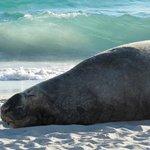 Elephant Seal am Strand (aussergewöhnliches Erlebnis!)