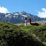 Alpacas la Foppa