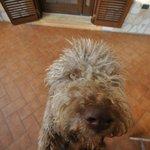 Uno degli splendidi cani da tartufo