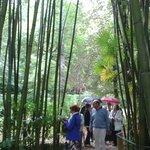 EL Jardín (Bambú)
