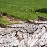 Iguanas Sunnng Along the Channel
