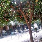 Jardim, cheio de laranjeiras