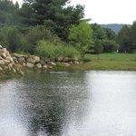 great pond for the birds and critters
