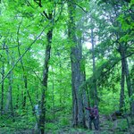 Forest, Farm Cove Community Forest