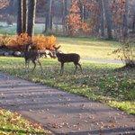 A Deer Friend!!