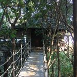 Tree House Room Entrance