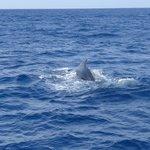 whale spotted near mirissa