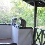Monkeys on our balcony