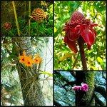 Flora from the garden