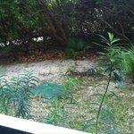 """Garden"" Tropical view room 1405"