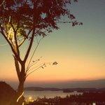 bel arbre 2