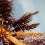 растут кокосы высоко