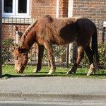 Horses in Brockenhurst