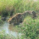 Cheetah during game drive